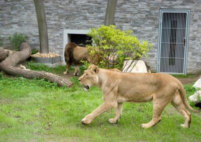 zoo krakowiskie - atrakcje dla dzieci w krakowie 2