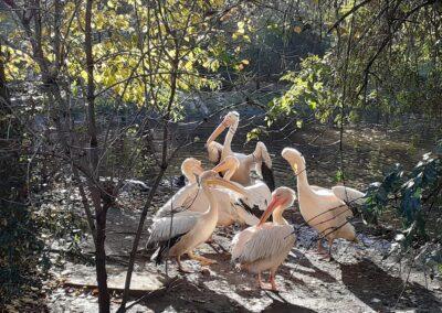 zoo krakowiskie - atrakcje dla dzieci w krakowie