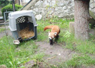 zoo krakowskie - kraków atrakcje dla dzieci